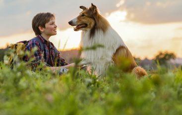 Najpoznatiji pas na svijetu, Lassie, se vraća kući i u kina!