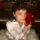 Norah Jones objavila utješnu zbirku bezvremenskih blagdanskih klasika i dirljivih novih pjesama